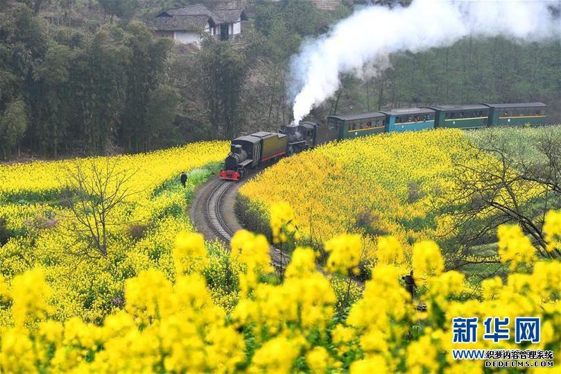 """(春季美丽生态)(1)四川犍为:""""开往春天""""的小火车"""