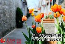 """街�^更新 北京胡同�e的""""春天""""藏不住 前�T� �^地�北京城市中�S�� �龋�是古都�f城重要�v史片�^。草�S三�l至十�l作�榍伴T� �^重�c�L貌保�o�^,在北京南城形成了��一�o二的城市肌理和建筑�L貌。【��】"""
