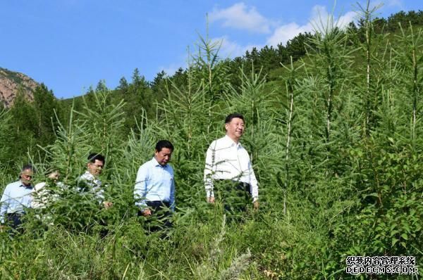 【独家视频】习近平深入喀喇沁旗林场农村考察调研